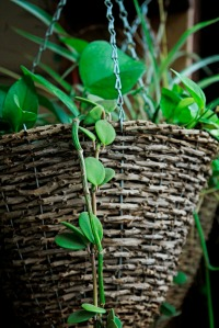Hanging baskets are great for vines and some types of fruit.
